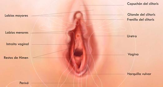 partes_genital_femenino